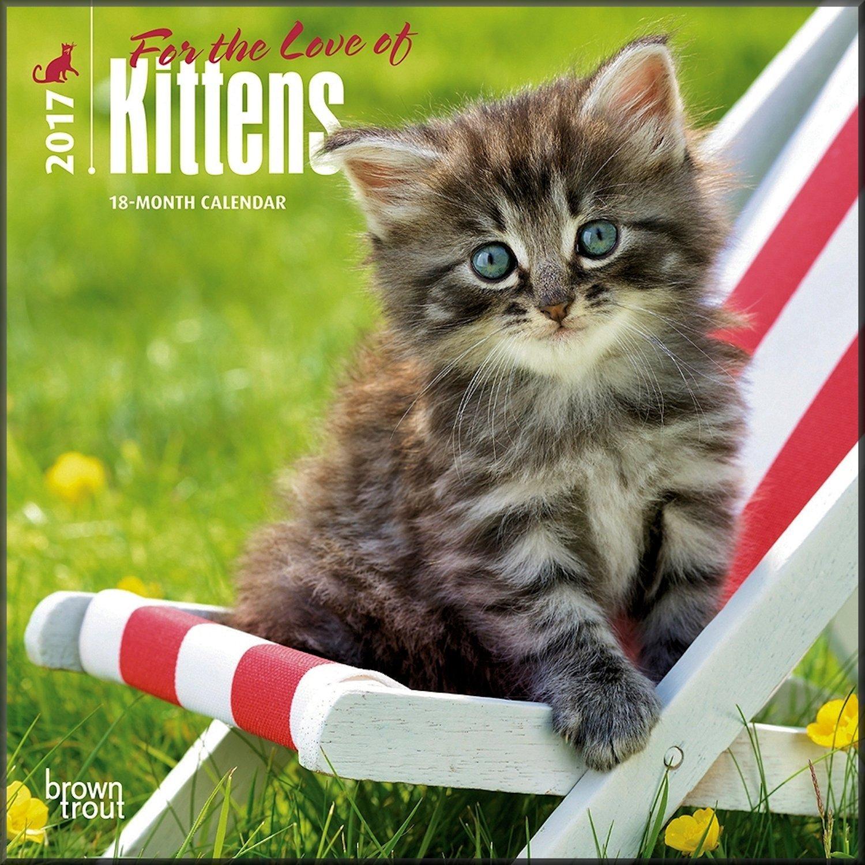 Kittens Mini Calendar 2017 - Deluxe Small Wall Calendar (7x7)