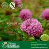 China herbs powder red clover p.e. from GMP supplier