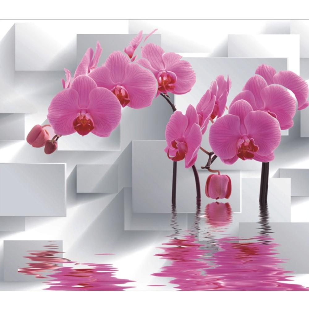 Gambar Bunga Anggrek Untuk Wallpaper