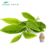 Manufacturer Supply Green Tea Extract L-Theanine 20% CAS: 34271-54-0