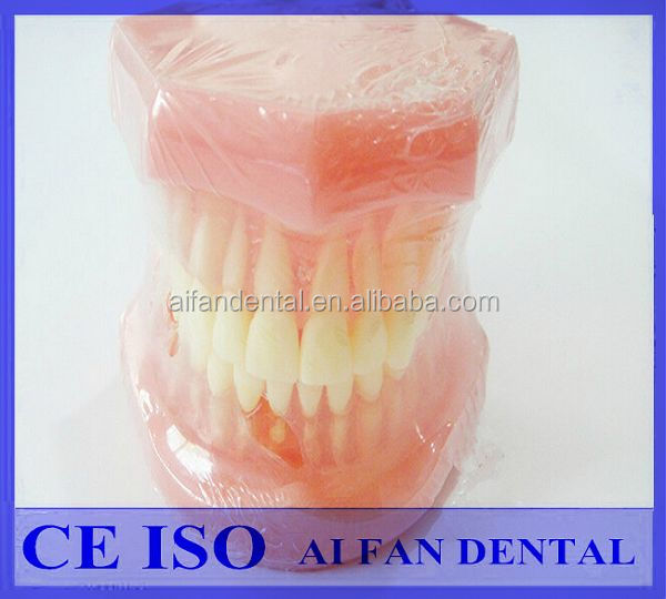 [ AiFan Dental ] Hot Selling Typodonts 7005 Pink Dental Demonstration Models with removable teeth
