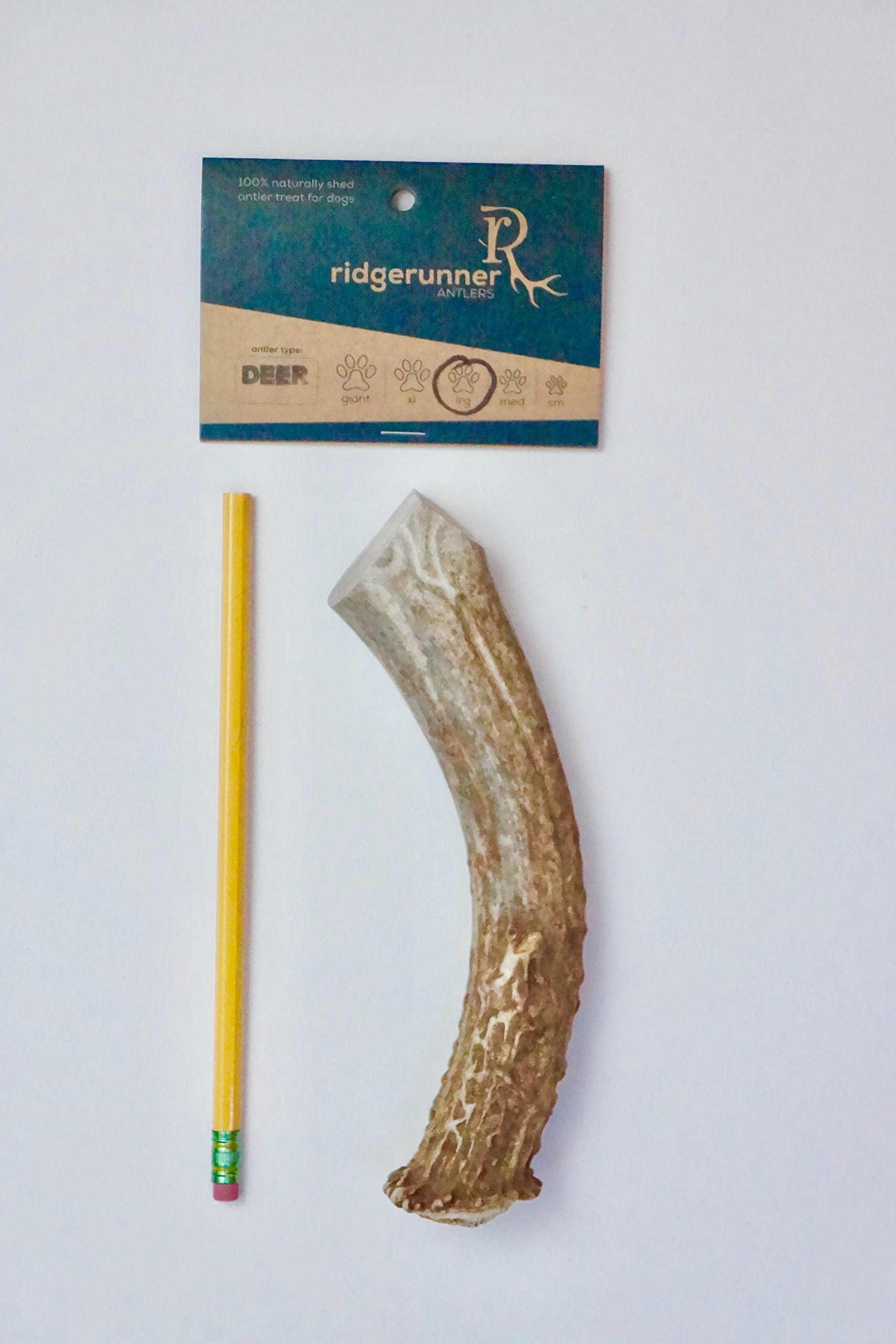 """ONE (1) Large Deer Antler Chew Bone For Dogs, 8"""" - 11, antler chews for Medium to Large dogs up to 60 pounds, Made in the USA from Wild Colorado Deer elk natural raw diet grade A premium"""