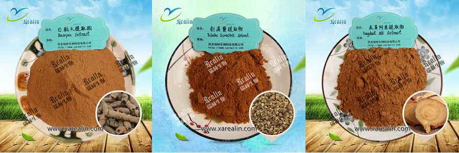 Healthy Energy Pure Maca Root 10:1 Maca Extract Powder for free sample