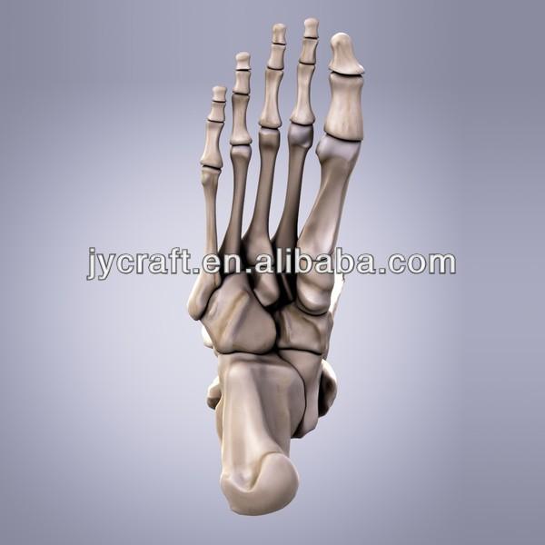 life size foot bone human skeleton model - buy human skeleton, Skeleton