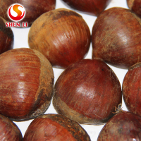 big size 2018 new crop fresh dandong chestnut for advance sale