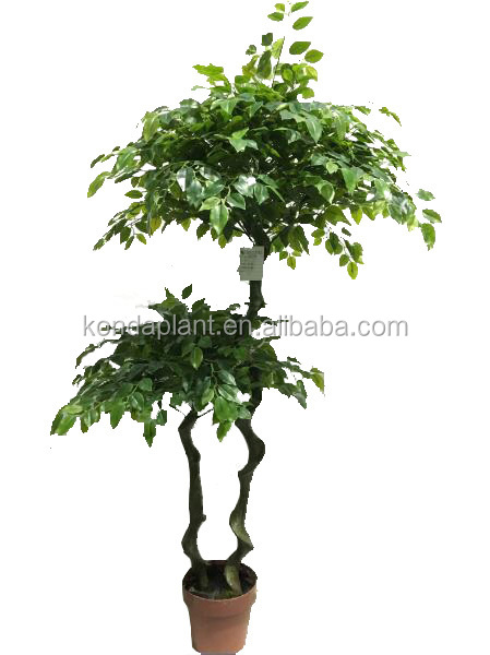 hot style live ficus tree artificial ficus tree tropical bonsai tree sale