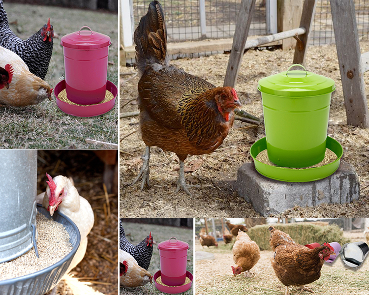 BSCI Certificate 6KGS Power Coated galvanized metal poultry feeder