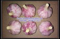 2016 New Fresh Red Garlic Product Normal White Garlic Price