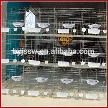 Trade Assurance 2m 3 Tiers Electro Galvanized Pigeon Racing Cages with Drinkers Feeders