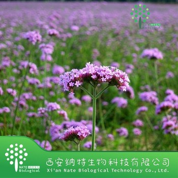 100% natural Herba Verbenae extract/European Verbena Herb Extract/Blue Vervain