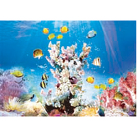 New High End Cute Colorful Printed 3d Little Fish Pictures