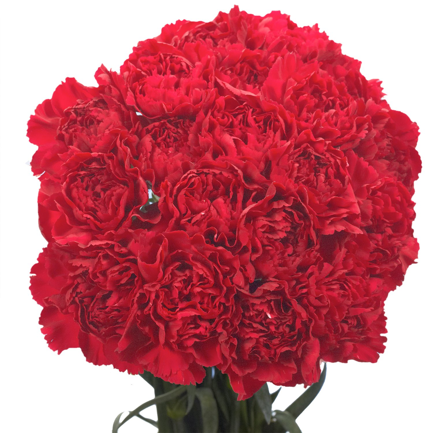 Cheap best valentine flowers find best valentine flowers deals on get quotations globalrose 100 fresh cut burgundy carnations for valentines day fresh flowers express delivery perfect izmirmasajfo
