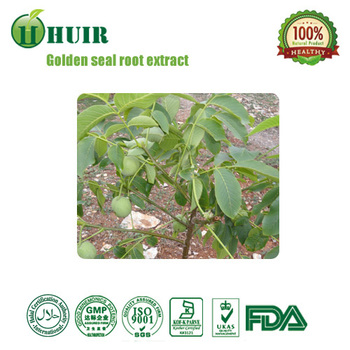 Competitive Price golden seal root extract,natural echinacea golden seal,gold seal detox