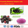 Sang shen Factory Supply Top Quality black mulberry fruit extract