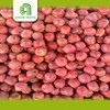 china appple fruit new high quality fresh top red huaniu apples price with high quality