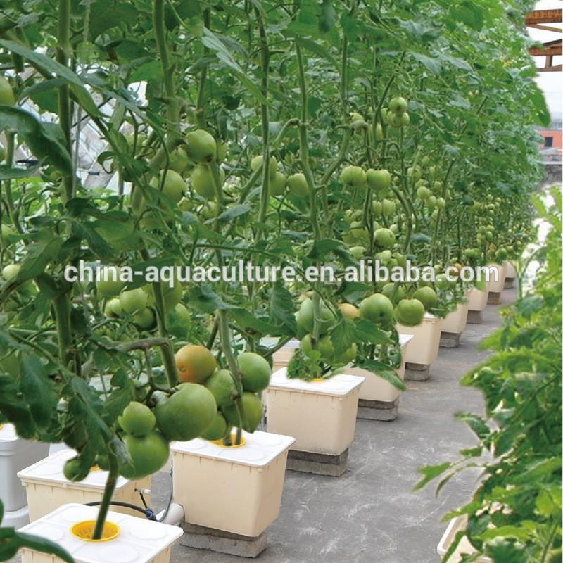 Dutch Buckets For Sale Aquaponics And Bato Buckets Buy