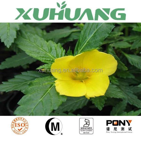 2015 hot selling damiana seeds/damiana extract/damiana powder