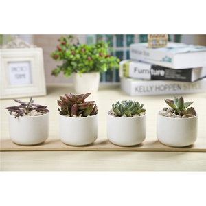 Wholesale European Design Succulent Plants Flower Pot Ceramic White
