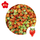 Low price frozen strawberry packing in carton