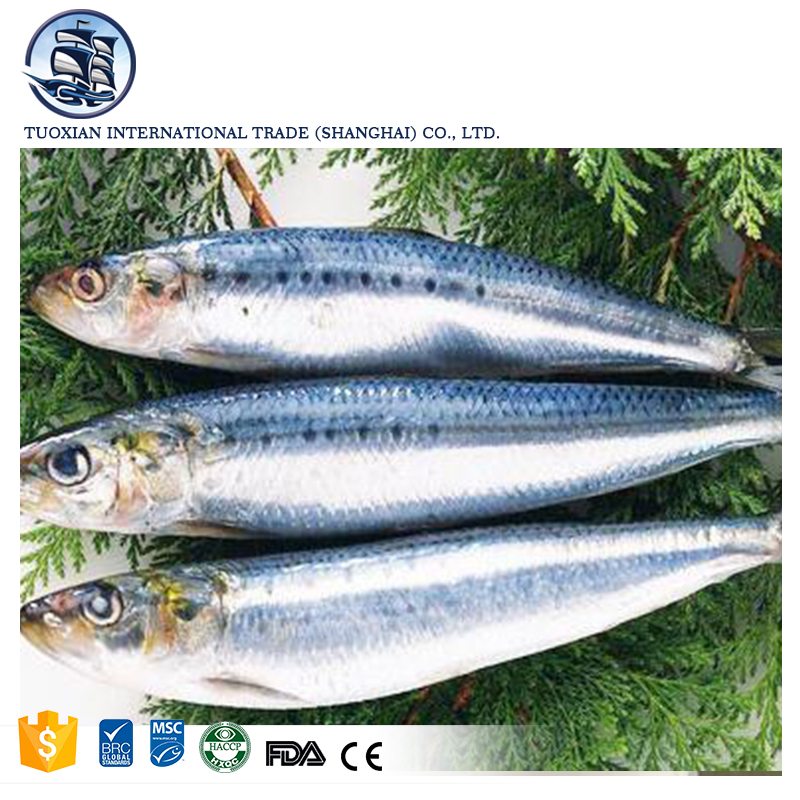 Frozen bonito skipjack tuna fish seafood suppliers sale, View bonito,  TUOXIAN Product Details from Tuoxian International Trading (Shanghai)  Limited