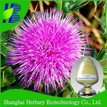 2017 Hot sale herbal extract Silybum marianum extract silymarin uv80%