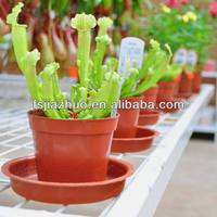 nursery plastic PP plant terracotta containers