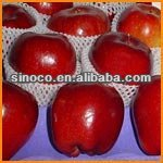 cheap apple fruit