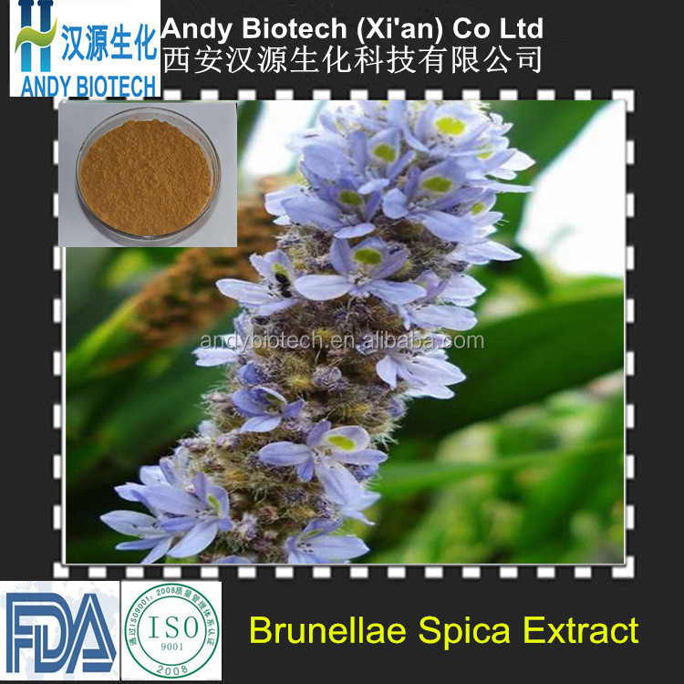 One hundred Percent High quality Brunellae Spica Extract