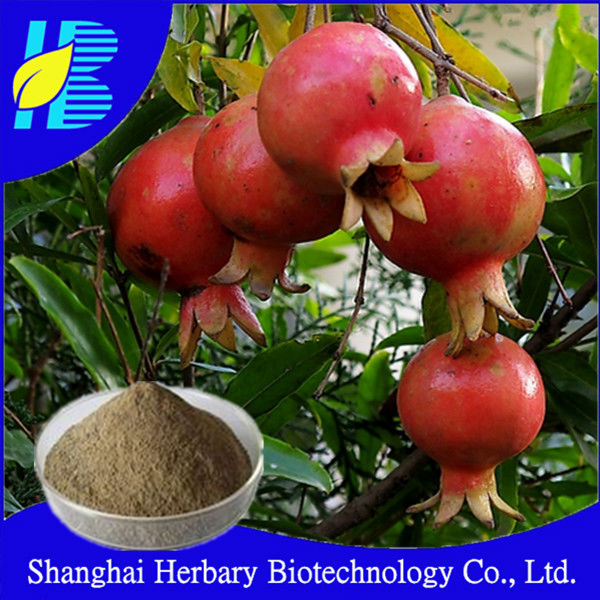 Pomegranate Hull extract,Ellagic acid,inhibit the cancer cells