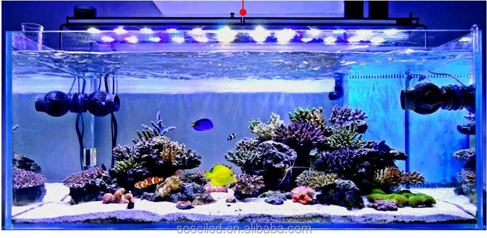 Sanrise Wifi Control 3ft 4ft Diy Led Coral Reef 240w Saltwater Led ...