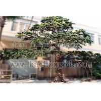 Artificial pine tree/artificial cedar tree/Artificial pines