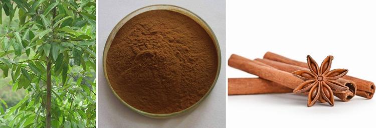 Natural Plant Extract Polysaccharide Ceylon Cinnamon Bark Extract