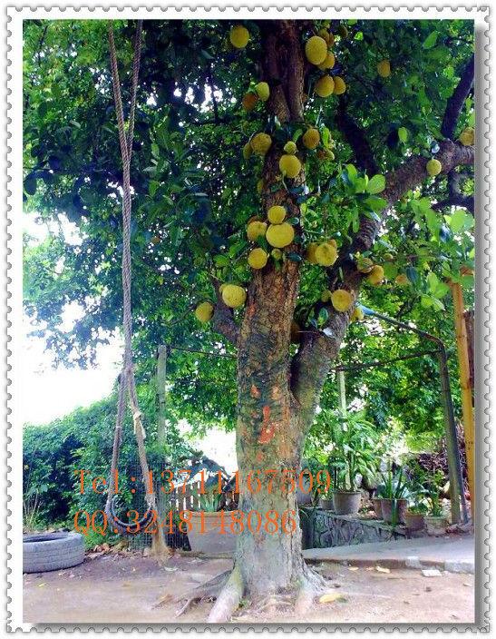 Plastic Artificial Banna Tree Fake Banana Pvc Artificial Fruit