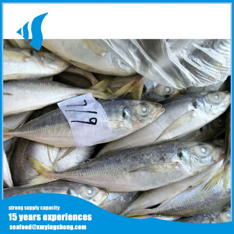 Hot selling Frozen Horse mackerel Round Scad fish on sale