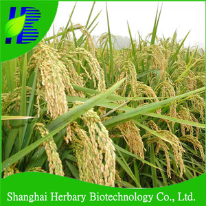 High budding rate hybrid rice seed for cultivating