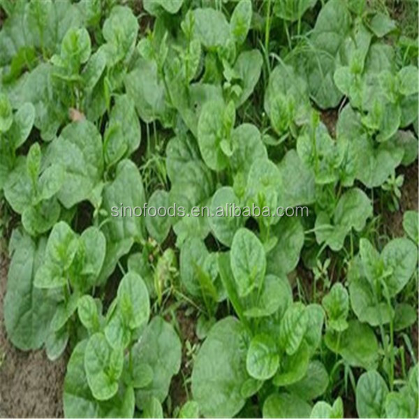 high quality red lady seeds papaya seed for sale