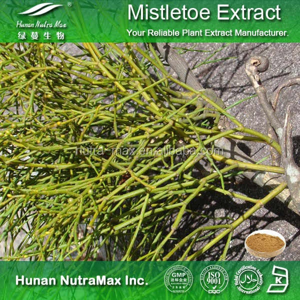 Natural Botanical Mistletoe Extract/ Mistletoe Powder/ Mistletoe P.E.