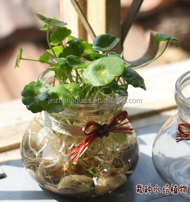 Interior Frasco De Vidrio Terrario Para Plantas Buy Product On - Terrario-para-plantas