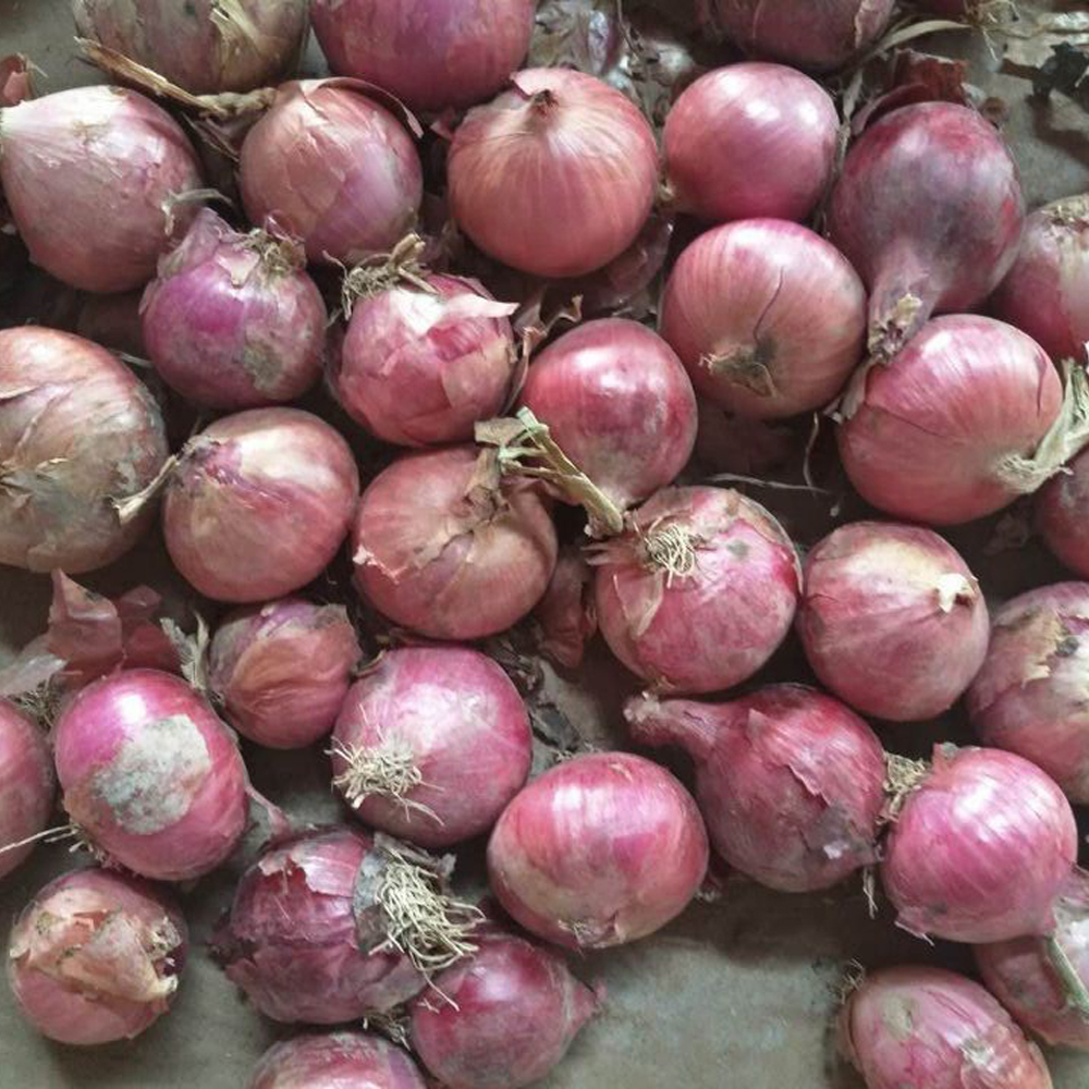 red onion specification fresh price exporters india
