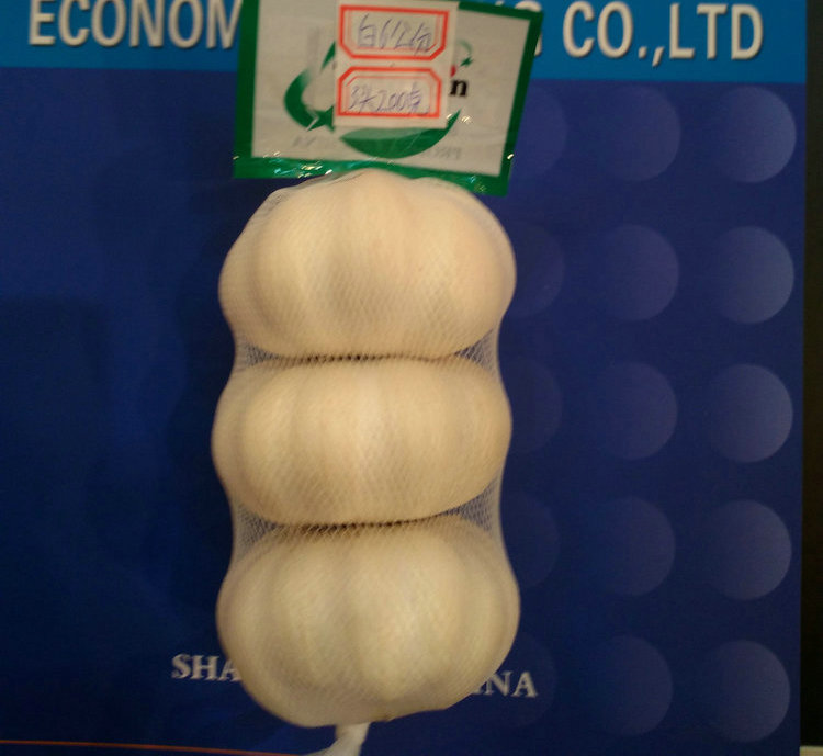 Professional supply New product Wholesale china garlic producers