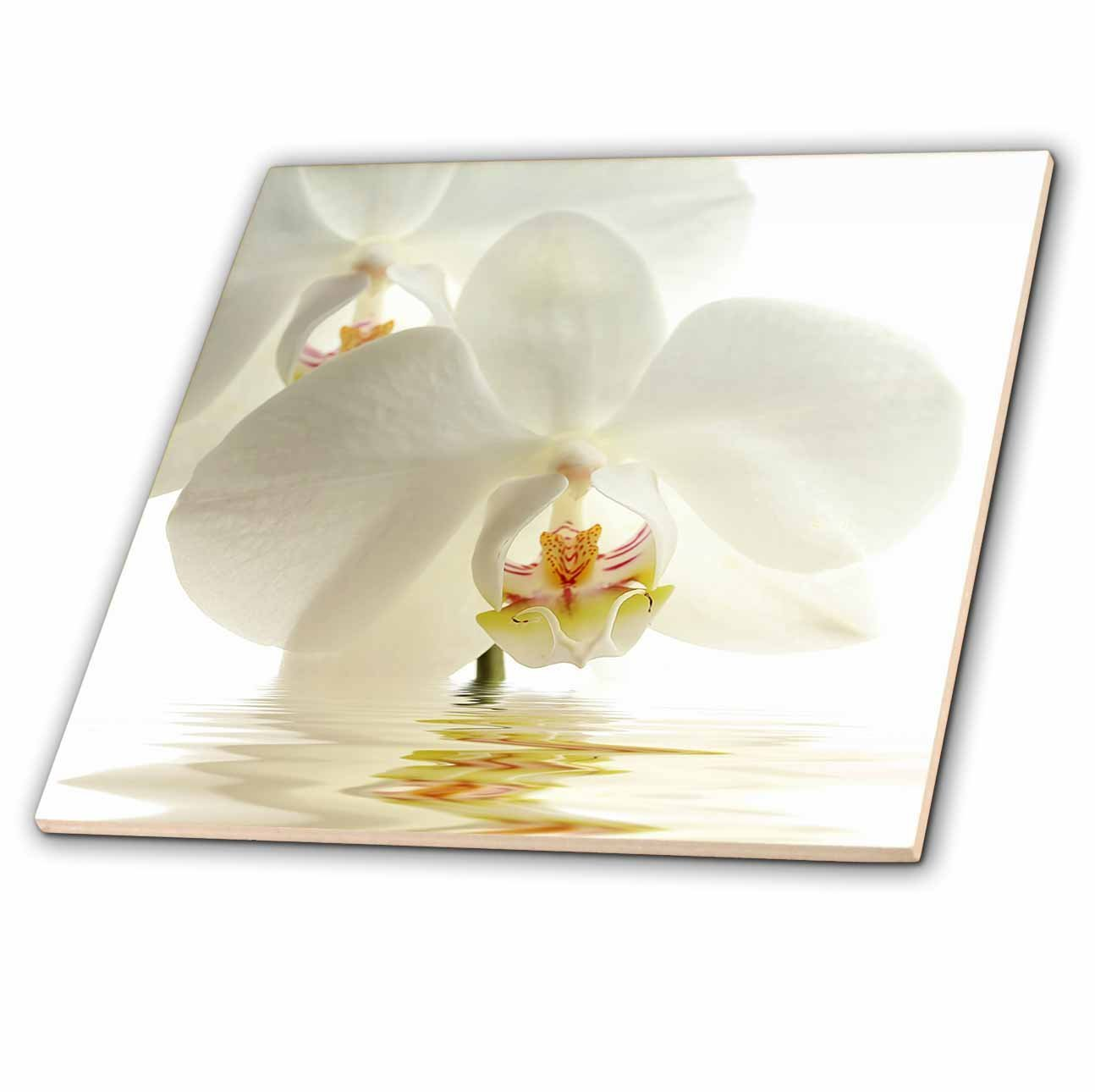 Buy 3drose Uta Naumann Photography Flowers White Orchid Flower In