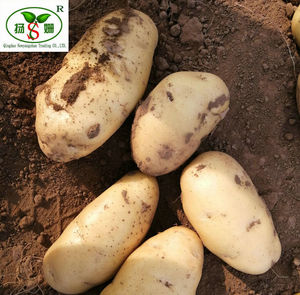 Fresh potatoes: At the end of June,The holland potato a large number of listed