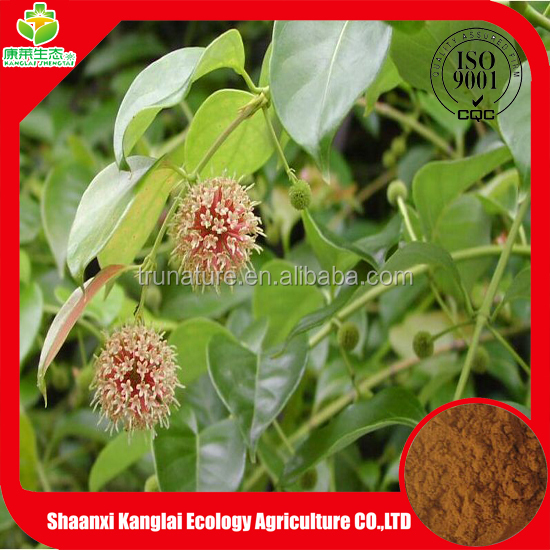 2015 NEW Product High Quality Ashwagandha Extract Leaves Powder/Withanolides 5% Extract Powder with Cheap Price
