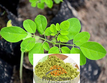 Energy moringa leaf powder for sport man with customized package