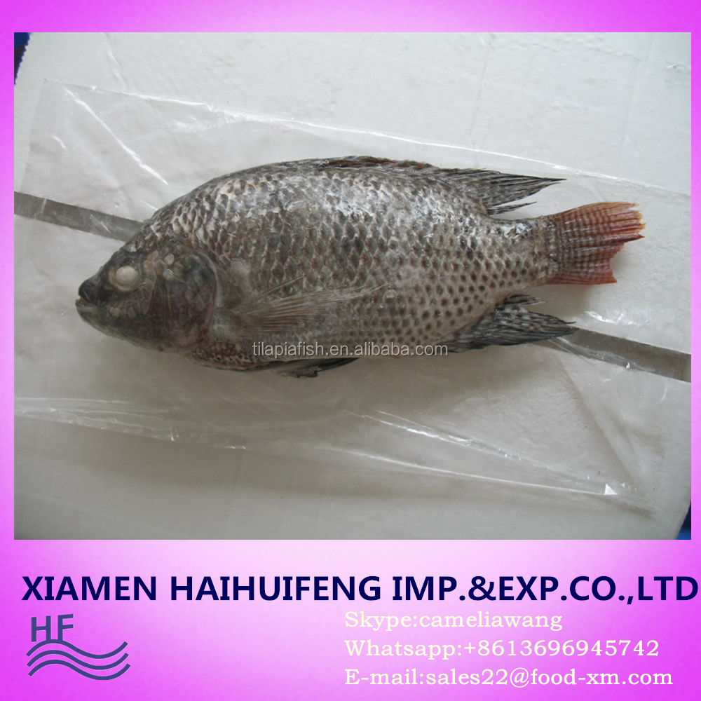 Price frozen tilapia fish whole round and gutted scaled