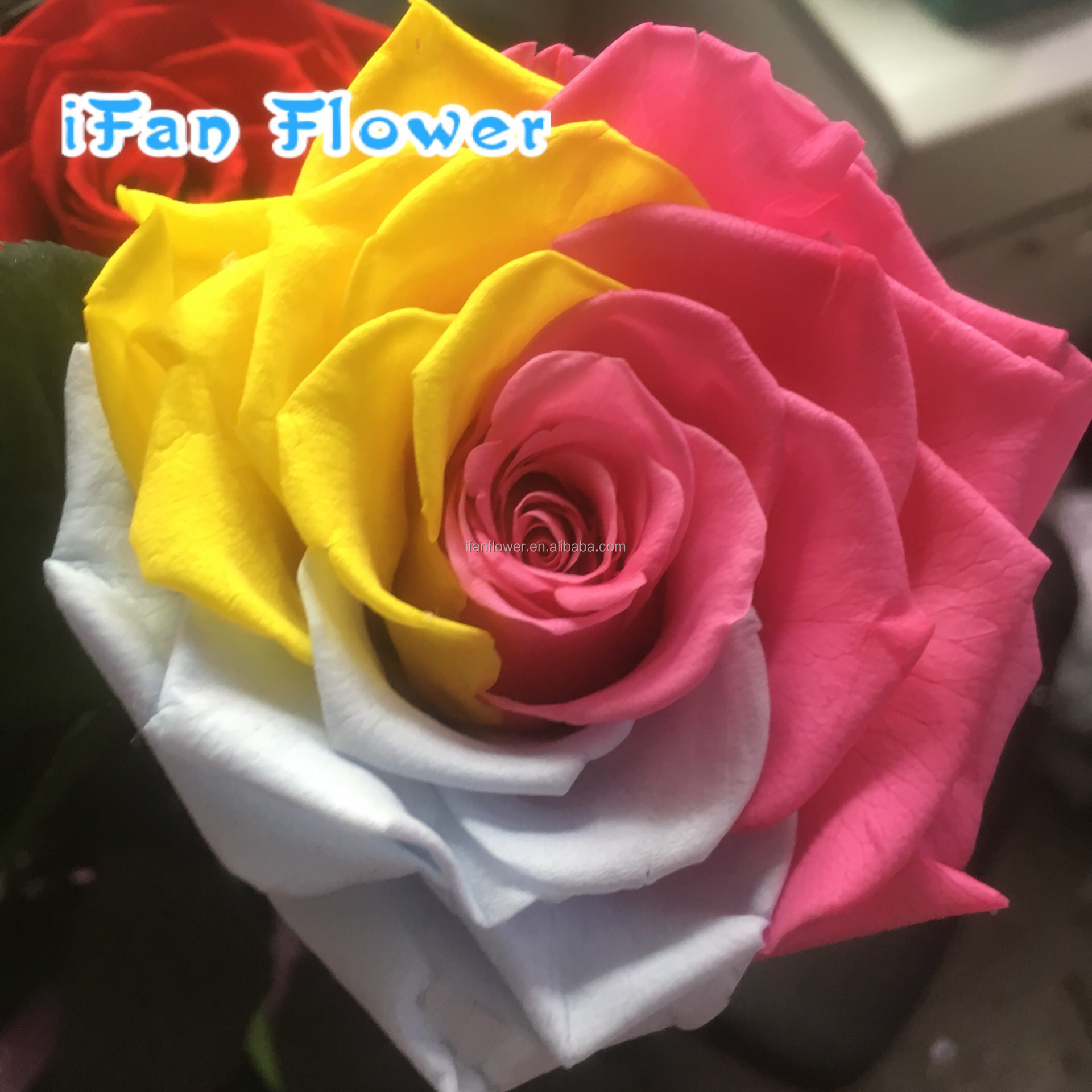 Preserved Rose Colorful Flowers Making For Home Decoration Perfect ...