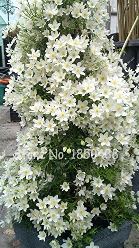 Cheap White Flower Farm Seeds Find White Flower Farm Seeds Deals On