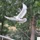 personalized standing artificial white doves decoration