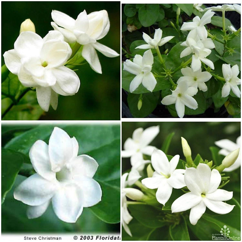 28ee9052294 Buy RJC Womens Pikake Jasmine Heliconia Tea Length Hawaiian Muumuu ...