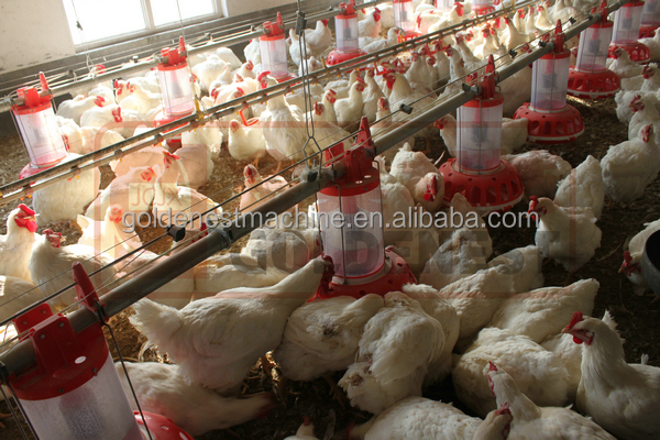 poultry feeding / raising / farming equipments for chickens
